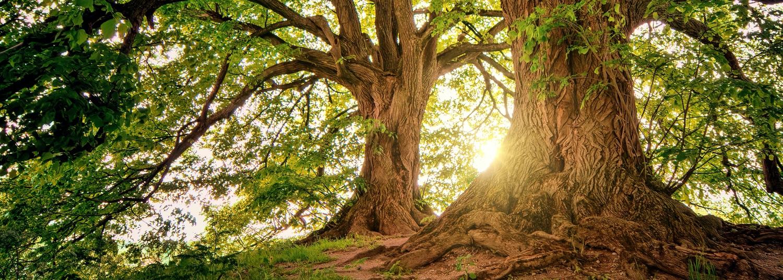 tree background